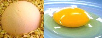 egg010701[1]