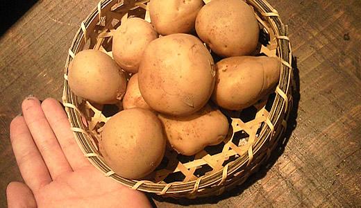 ちび馬鈴薯