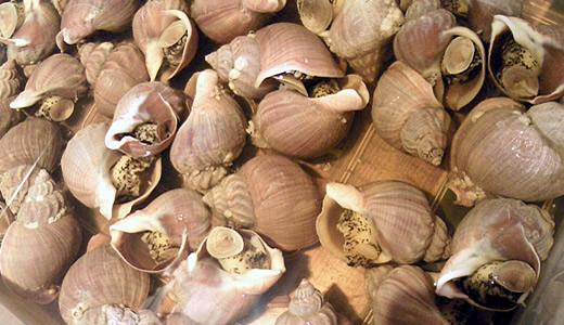つぶ貝のあっさり煮
