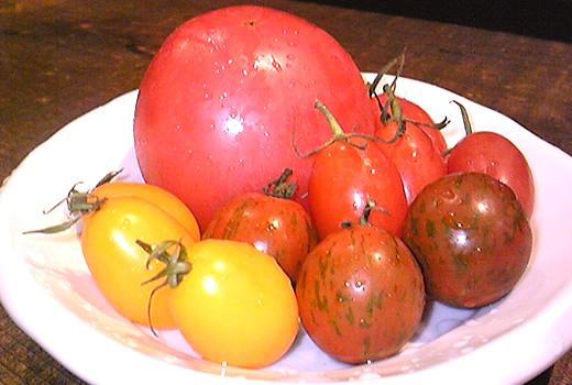 トマト様たち