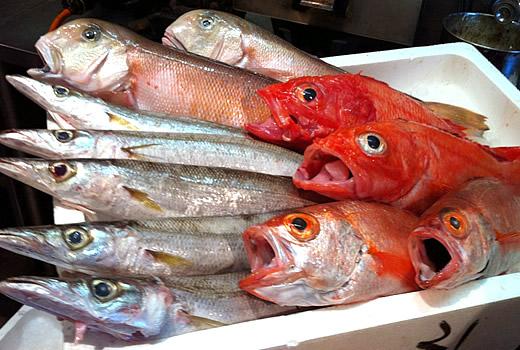 新鮮魚が勢揃いっ!!