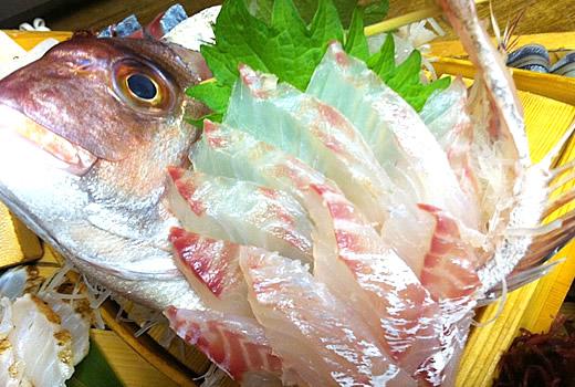 天然鯛刺身